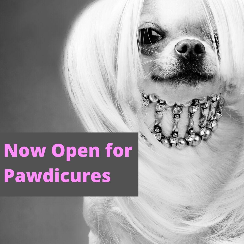 Elegant Poodle Pet Grooming Ad